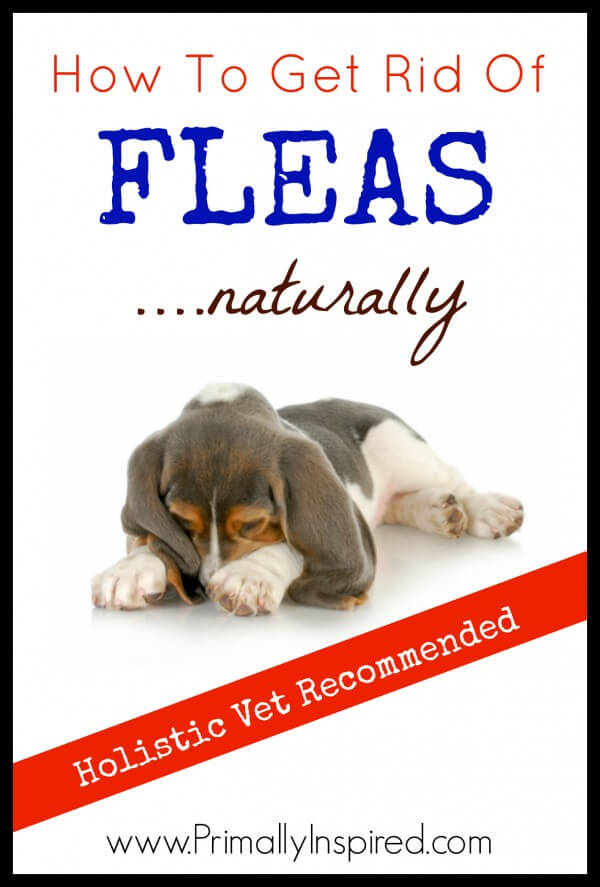 Natural Flea Control For Dogs Recipe