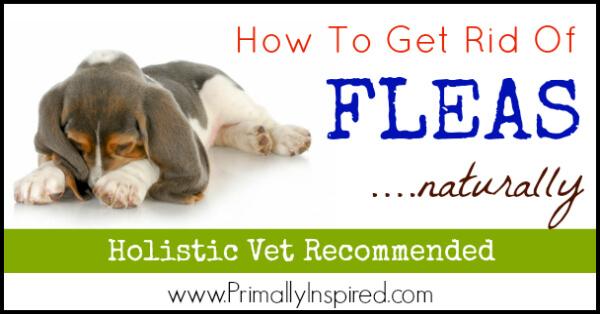 Natural Flea Control via Primally Inspired