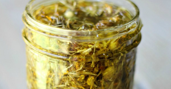 Learn how to make a homemade Arnica Oil for rapid relief of bruises, swelling, pain and muscle soreness. Arnica is one of the top effective and natural first aid remedies!