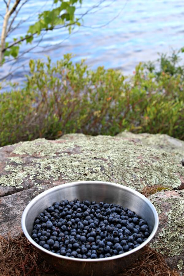 wildlakeblueberries