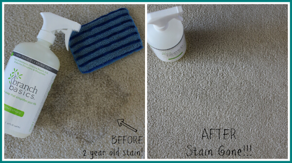 Carpet Stain with Branch Basics