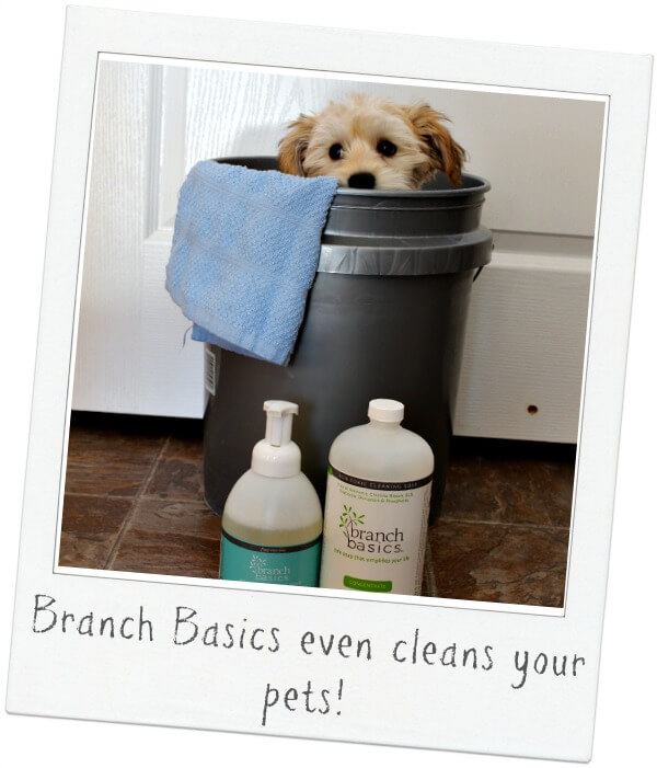 Branch Basics is great for pets!