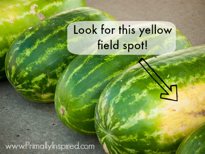 How to Pick a Watermelon via Primally Inspired