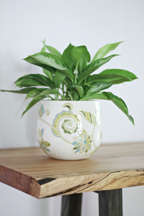Easiest Air Purifying Indoor Houseplants