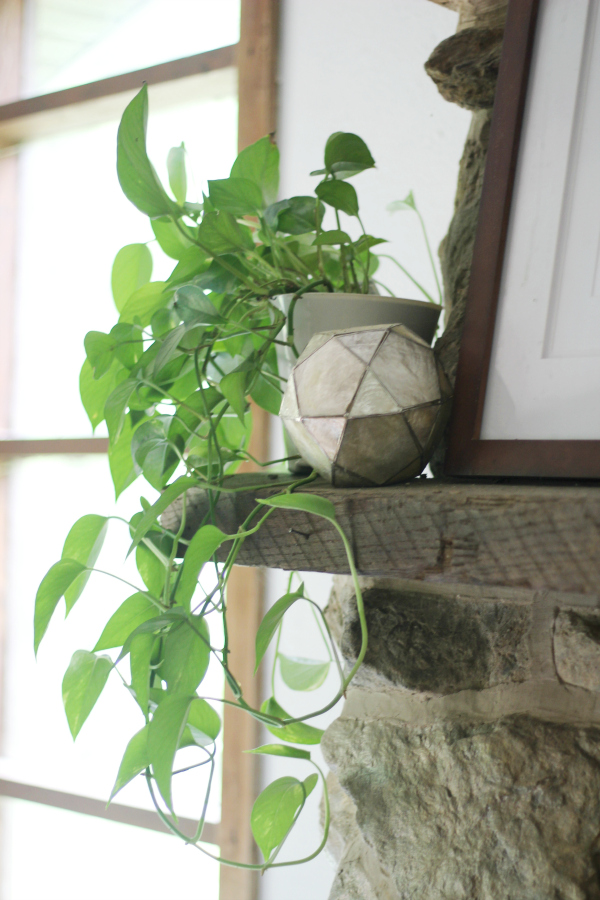 Easiest Indoor Plants to Grow - Golden Pothos