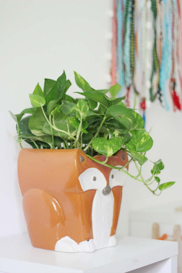 Easiest Air Purifying Indoor Plants