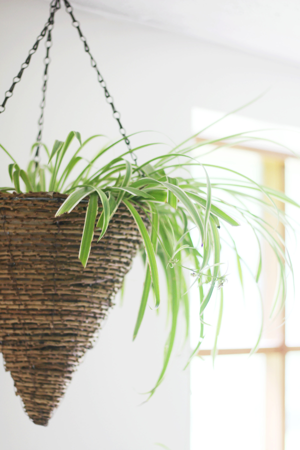 Easiest Air Purifying Indoor Plants to Grow