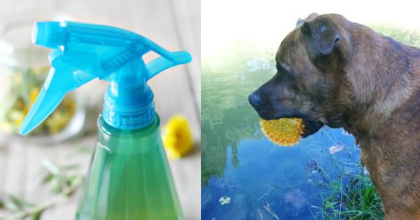 ACV Spray for Dogs DIY Recipe
