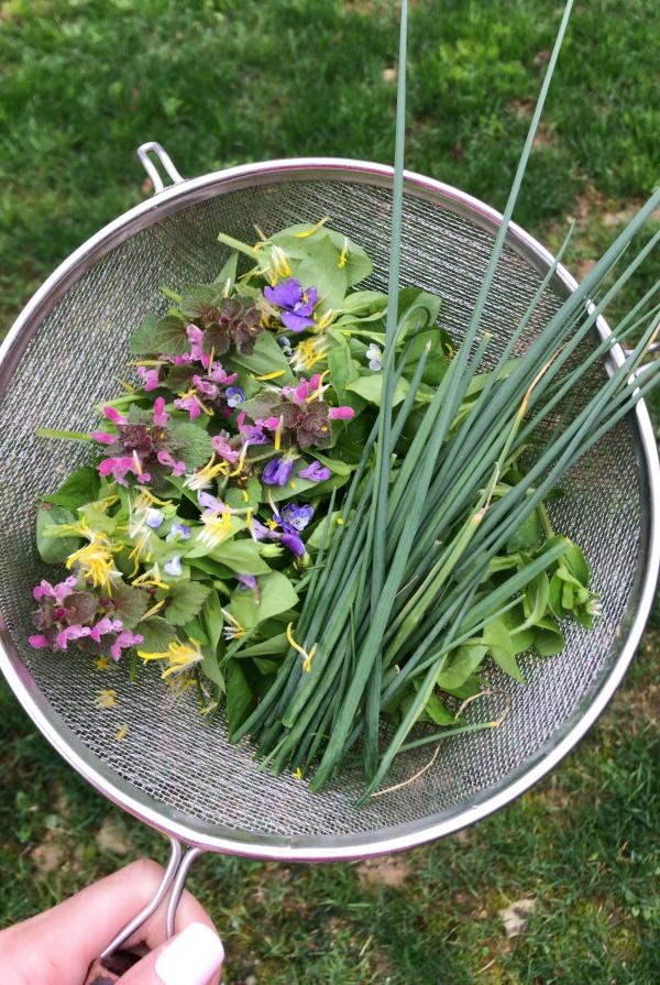Spring Wild Edible Plants - edible and medicinal