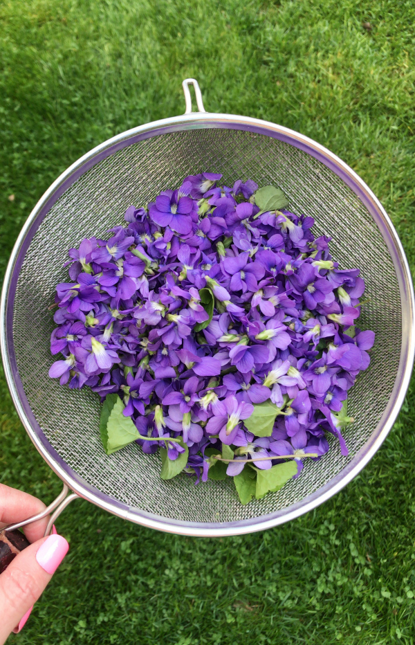 Wild Violets Identification - Edible and Medicinal