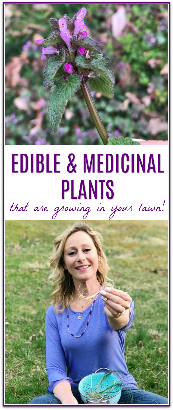 Spring Wild Edible and Medicinal Plants that are growing in your lawn