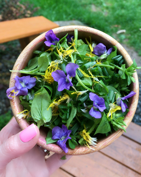 Spring Wild Edible Plants - edible and medicinal plants in your lawn