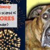 Natural Remedy If Your Dog Is Scared Of Fireworks Or Thunderstorms